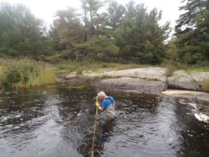 Measuring width of the spawning bed.